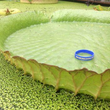 https://www.cambridgedream.com/wp-content/uploads/2015/03/Cambridge-University-Botanic-Garden-and-Research-Centre-1.jpg