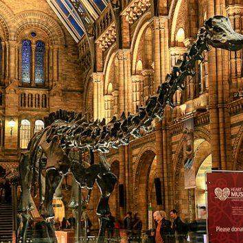 http://www.cambridgedream.com/wp-content/uploads/2015/03/Natural-History-Museum2.jpg