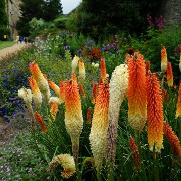 https://www.cambridgedream.com/wp-content/uploads/2015/03/New-College-Gardens-Oxford.jpg