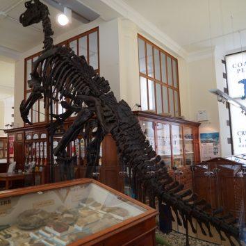 http://www.cambridgedream.com/wp-content/uploads/2015/03/Sedgwick-Museum-of-Earth-Sciences-Cambridge2.jpg