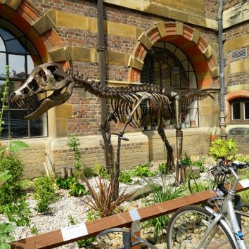 http://www.cambridgedream.com/wp-content/uploads/2015/03/Sedgwick-Museum-of-Earth-Sciences-Cambridge3.jpg