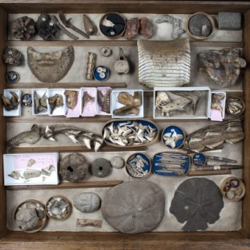 https://www.cambridgedream.com/wp-content/uploads/2015/03/Sedgwick-Museum-of-Earth-Sciences-Cambridge4.jpg